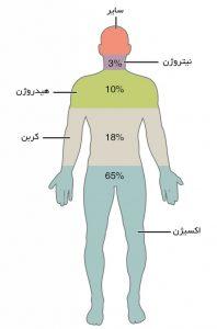 مقاله بررسی عناصر موجود در بدن انسان