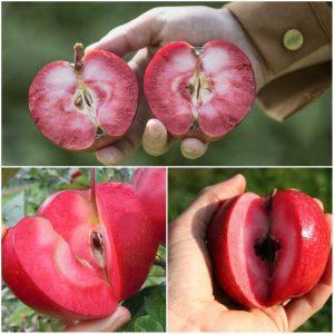 فواید سیب تو سرخ