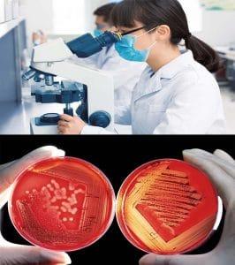 معرفی رشته میکروبیولوژی و بازار کار آن – همه چیز درباره زیست شناسی سلولی