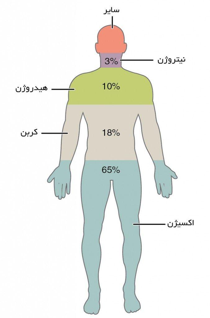 "<span itemprop=""name"">مقاله بررسی عناصر موجود در بدن انسان</span>"