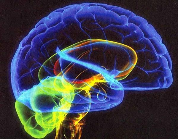 <span>چگونه ظرفیت استفاده از مغزمان را بالا ببریم؟</span>