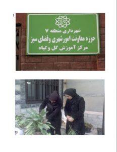 پایان نامه آفات و بیماری های مهم درخت بید